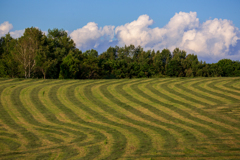 牧草の再刈り