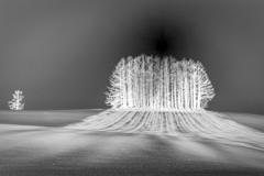 樹氷の月夜