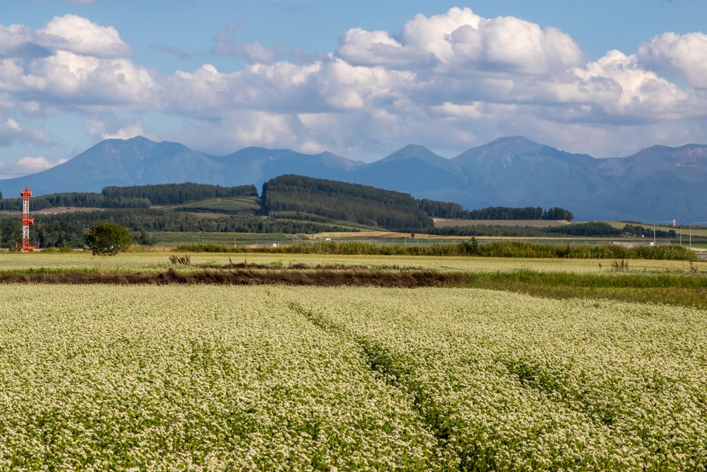 就実の丘と蕎麦畑