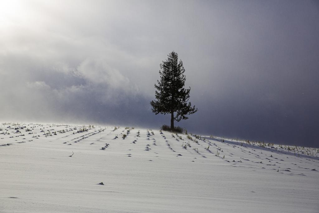 青空と地吹雪をずっと撮りたかった