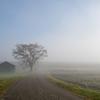 朝霧這う緑の小屋