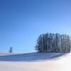 マイルドセブンの柔らかな樹影
