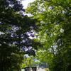 夏の木陰と人力車