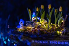 Jewel of Shonan