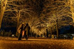 Autumn night walk 2