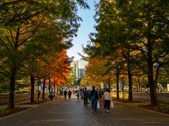 秋の通り道