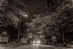 Full bloom at night