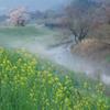 津屋川の朝