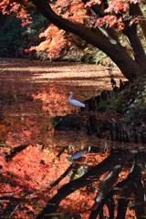 「六義園の秋」N400