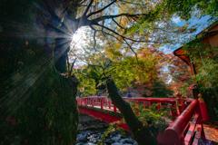 修善寺 桂川の回廊