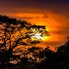 夕陽のシルエット