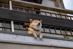 下田の癒し犬