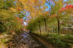 初秋の桂川