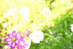 小春日和に咲く花