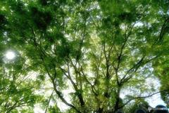 邸宅の庭の木洩れ日