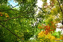 京都の秋 ~龍安寺 外庭~