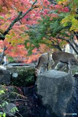 奈良公園 ~秋~