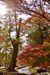 それぞれの紅葉 ~上賀茂神社~
