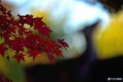奈良公園の秋