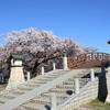 裁断橋と桜