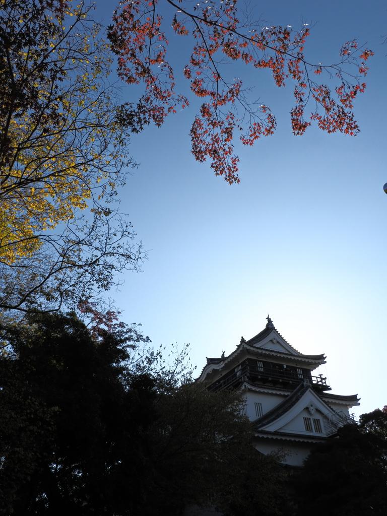 岡崎公園 11/14❻