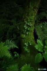 モノノケの森 ①
