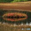 栂池の秋 ⑤