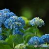初夏の青 ②