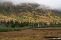 栂池の秋 ②