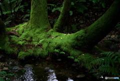 モノノケの森 ②