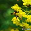 花いっぱいの季節