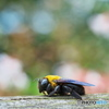 Bumble bee ②