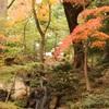 旧古河庭園の紅葉⑤