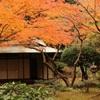旧古河庭園の紅葉①