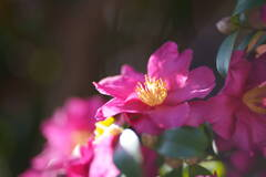 咲いたもの勝ち