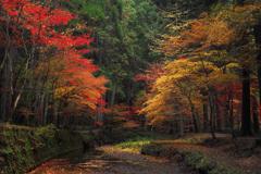 散る秋(4)