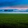 朝の田園風景