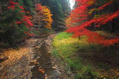 散る秋(終)