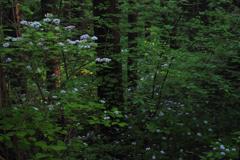 森の中にひっそりと(1)