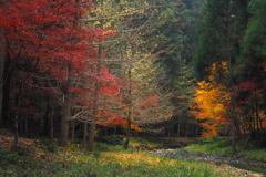 散る秋 (2)