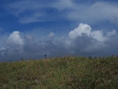 梅雨晴れの草原