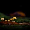 暗い森の中に佇む家族