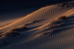 砂漠に生きる