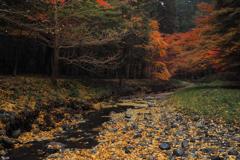 散る秋(3)