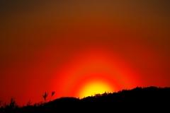 日没前の花粉光環
