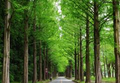 新緑の並木を駆ける