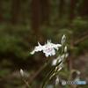 里山に咲いていたお花