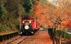 秋の嵯峨野
