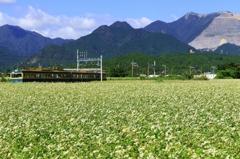 満開の蕎麦の花