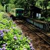 紫陽花の鉄路